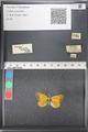 http://mczbase.mcz.harvard.edu/specimen_images/ent-lepidoptera/images/2011_03_21/IMG_077656.JPG