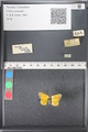 http://mczbase.mcz.harvard.edu/specimen_images/ent-lepidoptera/images/2011_03_21/IMG_077657.JPG