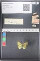 http://mczbase.mcz.harvard.edu/specimen_images/ent-lepidoptera/images/2011_03_21/IMG_077658.JPG