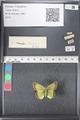 http://mczbase.mcz.harvard.edu/specimen_images/ent-lepidoptera/images/2011_03_21/IMG_077660.JPG
