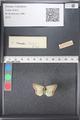 http://mczbase.mcz.harvard.edu/specimen_images/ent-lepidoptera/images/2011_03_21/IMG_077661.JPG
