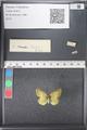 http://mczbase.mcz.harvard.edu/specimen_images/ent-lepidoptera/images/2011_03_21/IMG_077662.JPG
