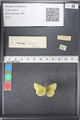 http://mczbase.mcz.harvard.edu/specimen_images/ent-lepidoptera/images/2011_03_21/IMG_077668.JPG