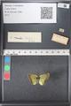 http://mczbase.mcz.harvard.edu/specimen_images/ent-lepidoptera/images/2011_03_21/IMG_077669.JPG