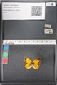 http://mczbase.mcz.harvard.edu/specimen_images/ent-lepidoptera/images/2011_03_21/IMG_077673.JPG