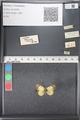 http://mczbase.mcz.harvard.edu/specimen_images/ent-lepidoptera/images/2011_03_21/IMG_077677.JPG