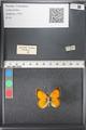http://mczbase.mcz.harvard.edu/specimen_images/ent-lepidoptera/images/2011_03_21/IMG_077678.JPG