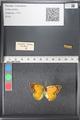 http://mczbase.mcz.harvard.edu/specimen_images/ent-lepidoptera/images/2011_03_21/IMG_077679.JPG