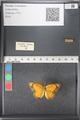 http://mczbase.mcz.harvard.edu/specimen_images/ent-lepidoptera/images/2011_03_21/IMG_077680.JPG