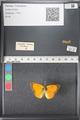 http://mczbase.mcz.harvard.edu/specimen_images/ent-lepidoptera/images/2011_03_21/IMG_077684.JPG
