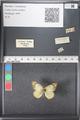 http://mczbase.mcz.harvard.edu/specimen_images/ent-lepidoptera/images/2011_03_21/IMG_077686.JPG