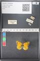 http://mczbase.mcz.harvard.edu/specimen_images/ent-lepidoptera/images/2011_03_21/IMG_077687.JPG