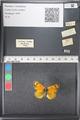 http://mczbase.mcz.harvard.edu/specimen_images/ent-lepidoptera/images/2011_03_21/IMG_077688.JPG