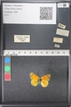 http://mczbase.mcz.harvard.edu/specimen_images/ent-lepidoptera/images/2011_03_21/IMG_077689.JPG