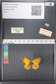 http://mczbase.mcz.harvard.edu/specimen_images/ent-lepidoptera/images/2011_03_21/IMG_077691.JPG