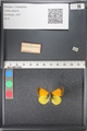 http://mczbase.mcz.harvard.edu/specimen_images/ent-lepidoptera/images/2011_03_21/IMG_077693.JPG