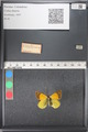 http://mczbase.mcz.harvard.edu/specimen_images/ent-lepidoptera/images/2011_03_21/IMG_077694.JPG