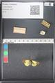 http://mczbase.mcz.harvard.edu/specimen_images/ent-lepidoptera/images/2011_03_21/IMG_077695.JPG