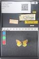 http://mczbase.mcz.harvard.edu/specimen_images/ent-lepidoptera/images/2011_03_21/IMG_077696.JPG