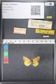 http://mczbase.mcz.harvard.edu/specimen_images/ent-lepidoptera/images/2011_03_21/IMG_077697.JPG