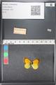 http://mczbase.mcz.harvard.edu/specimen_images/ent-lepidoptera/images/2011_03_21/IMG_077698.JPG