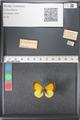 http://mczbase.mcz.harvard.edu/specimen_images/ent-lepidoptera/images/2011_03_21/IMG_077699.JPG