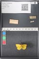 http://mczbase.mcz.harvard.edu/specimen_images/ent-lepidoptera/images/2011_03_21/IMG_077701.JPG