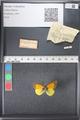 http://mczbase.mcz.harvard.edu/specimen_images/ent-lepidoptera/images/2011_03_21/IMG_077703.JPG
