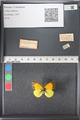http://mczbase.mcz.harvard.edu/specimen_images/ent-lepidoptera/images/2011_03_21/IMG_077704.JPG