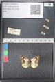 http://mczbase.mcz.harvard.edu/specimen_images/ent-lepidoptera/images/2011_03_21/IMG_077712.JPG