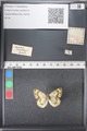 http://mczbase.mcz.harvard.edu/specimen_images/ent-lepidoptera/images/2011_03_21/IMG_077714.JPG