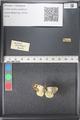 http://mczbase.mcz.harvard.edu/specimen_images/ent-lepidoptera/images/2011_03_21/IMG_077715.JPG