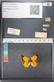http://mczbase.mcz.harvard.edu/specimen_images/ent-lepidoptera/images/2011_03_21/IMG_077716.JPG