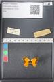 http://mczbase.mcz.harvard.edu/specimen_images/ent-lepidoptera/images/2011_03_21/IMG_077717.JPG