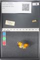 http://mczbase.mcz.harvard.edu/specimen_images/ent-lepidoptera/images/2011_03_21/IMG_077718.JPG