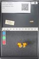http://mczbase.mcz.harvard.edu/specimen_images/ent-lepidoptera/images/2011_03_21/IMG_077720.JPG