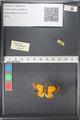http://mczbase.mcz.harvard.edu/specimen_images/ent-lepidoptera/images/2011_03_21/IMG_077721.JPG