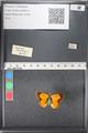 http://mczbase.mcz.harvard.edu/specimen_images/ent-lepidoptera/images/2011_03_21/IMG_077722.JPG