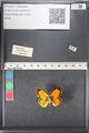 http://mczbase.mcz.harvard.edu/specimen_images/ent-lepidoptera/images/2011_03_21/IMG_077723.JPG