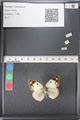 http://mczbase.mcz.harvard.edu/specimen_images/ent-lepidoptera/images/2011_03_21/IMG_077727.JPG