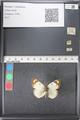 http://mczbase.mcz.harvard.edu/specimen_images/ent-lepidoptera/images/2011_03_21/IMG_077728.JPG