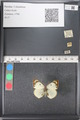 http://mczbase.mcz.harvard.edu/specimen_images/ent-lepidoptera/images/2011_03_21/IMG_077729.JPG