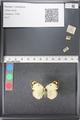 http://mczbase.mcz.harvard.edu/specimen_images/ent-lepidoptera/images/2011_03_21/IMG_077730.JPG