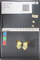 http://mczbase.mcz.harvard.edu/specimen_images/ent-lepidoptera/images/2011_03_21/IMG_077732.JPG