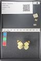 http://mczbase.mcz.harvard.edu/specimen_images/ent-lepidoptera/images/2011_03_21/IMG_077736.JPG