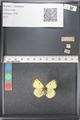 http://mczbase.mcz.harvard.edu/specimen_images/ent-lepidoptera/images/2011_03_21/IMG_077738.JPG