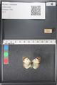 http://mczbase.mcz.harvard.edu/specimen_images/ent-lepidoptera/images/2011_03_21/IMG_077739.JPG