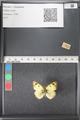 http://mczbase.mcz.harvard.edu/specimen_images/ent-lepidoptera/images/2011_03_21/IMG_077741.JPG