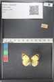 http://mczbase.mcz.harvard.edu/specimen_images/ent-lepidoptera/images/2011_03_21/IMG_077742.JPG