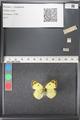 http://mczbase.mcz.harvard.edu/specimen_images/ent-lepidoptera/images/2011_03_21/IMG_077743.JPG